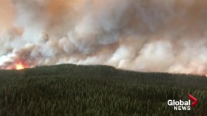 Forestry experts call for more controlled burning in BC to reduce risk of wildfire